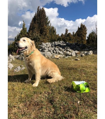 LLUKU DRINKER FOR DOGS AND CHATS TENNIS DOG