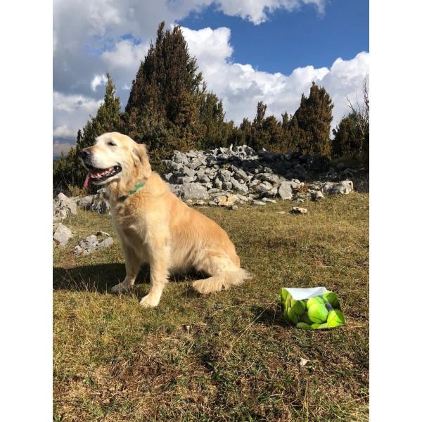 https://www.clements.es/1655-thickbox_default/bevedor-per-gossos-black-dog-.jpg