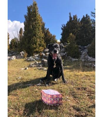 LLUKU DRINKER FOUR CHIENS ET CHATS LOVE DOG