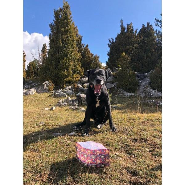 https://www.clements.es/1664-thickbox_default/lluku-drinker-for-dogs-black-dog-.jpg